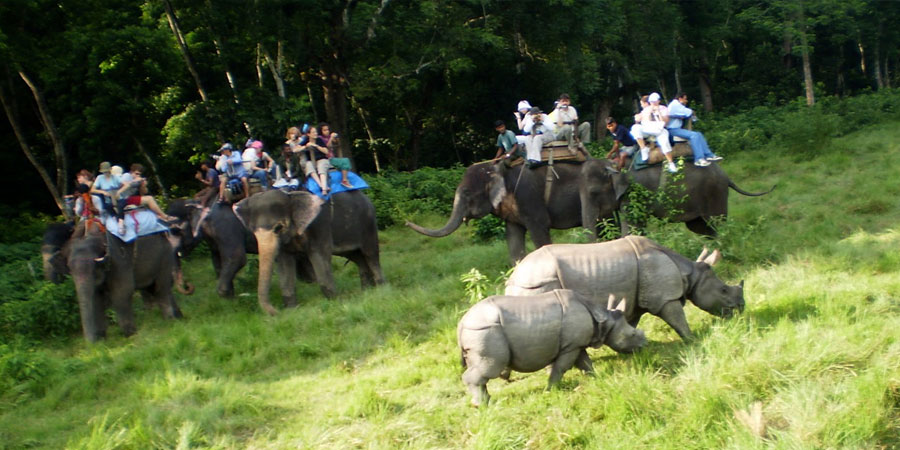 Image result for chitwan forest nepal